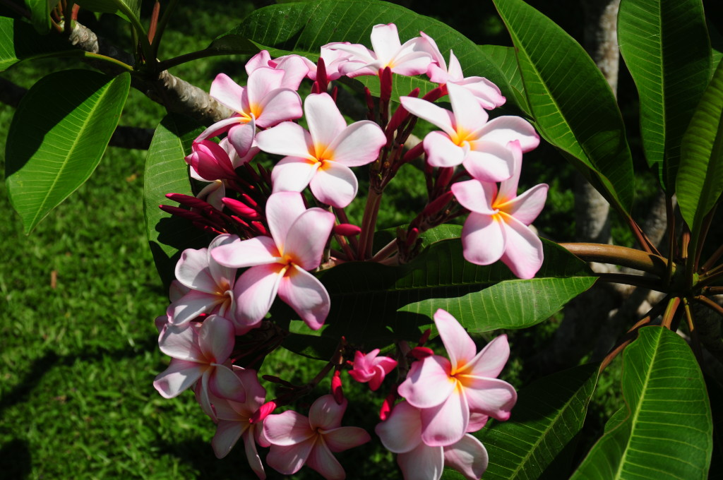 Tropical flowers at Purity